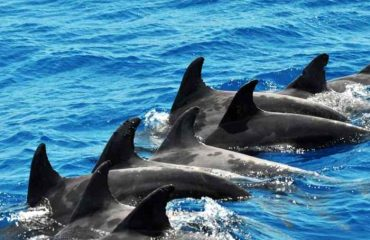 Whale and Dolphin Search