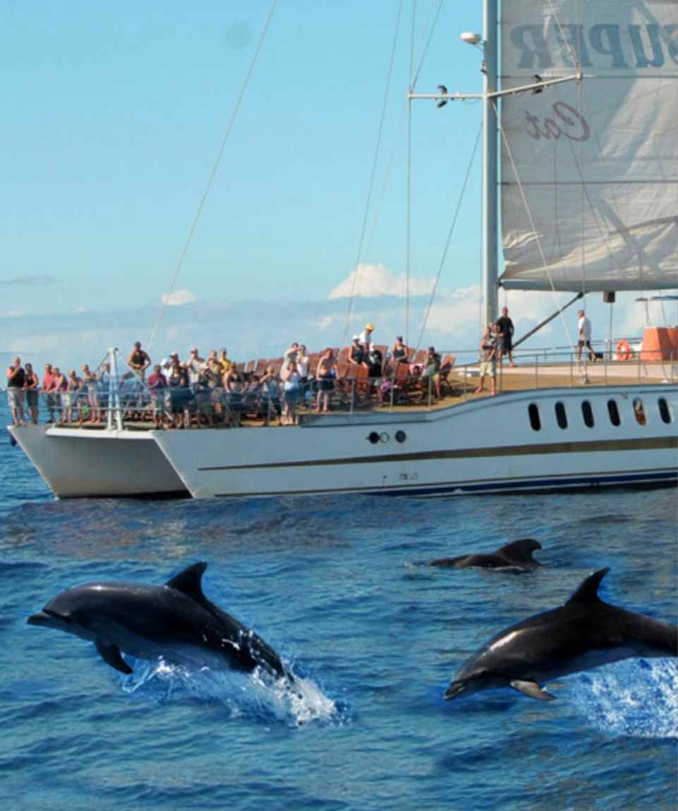 Whale and Dolphin Search Gran Canaria