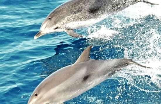 Dolphin & Market Puerto de Mogán Gran Canaria