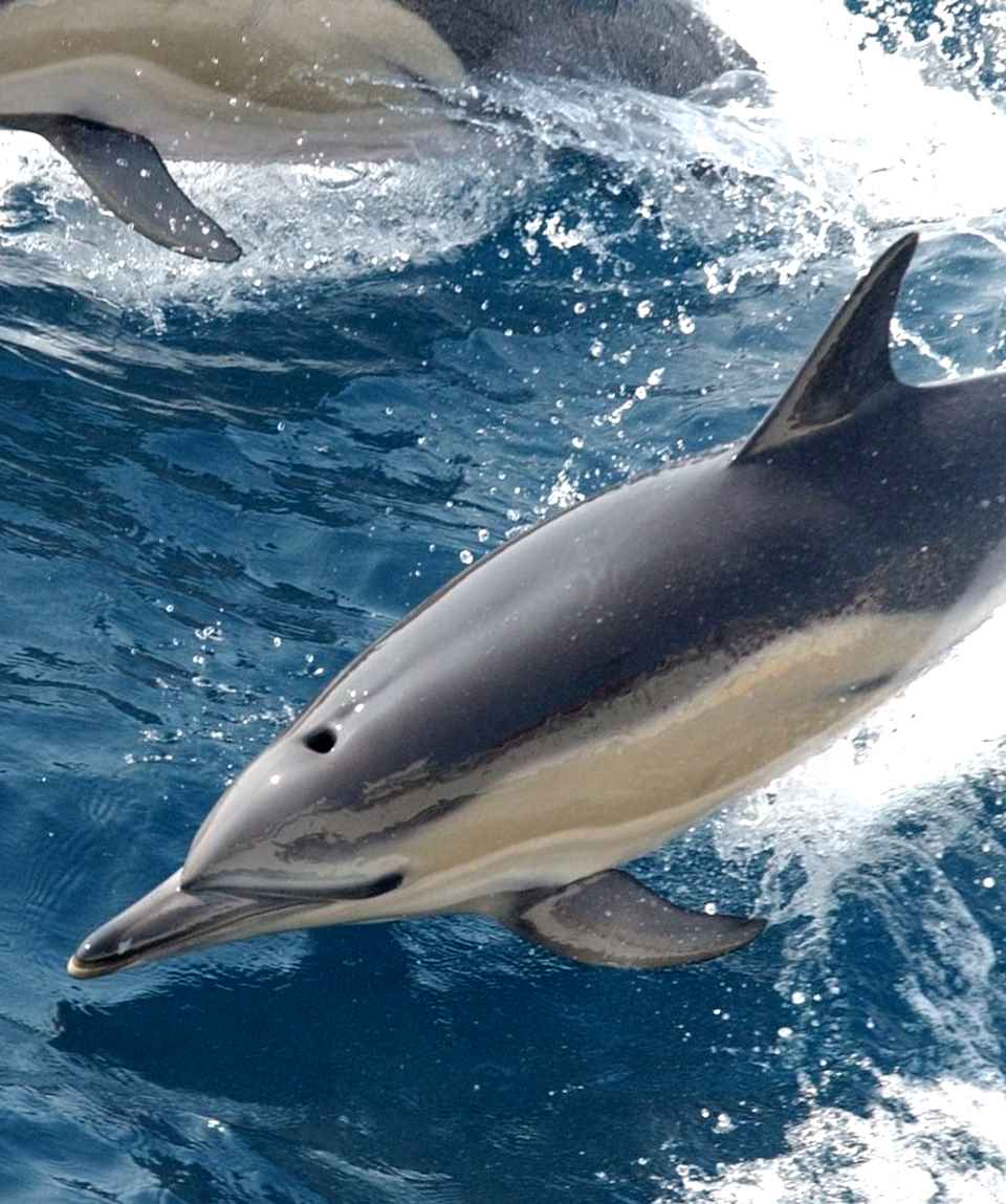 Dolphins & Swimming Gran Canaria