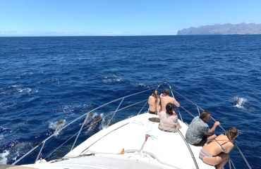 Walen & Delfine Puerto de Mogán