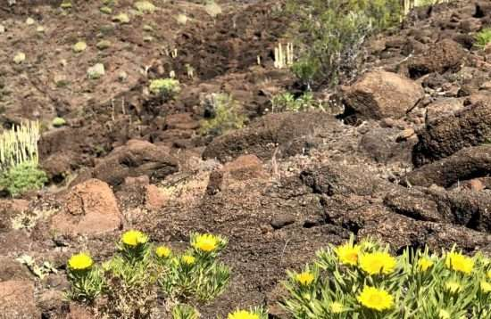 Hiking Mogan to Veneguera Gran Canaria