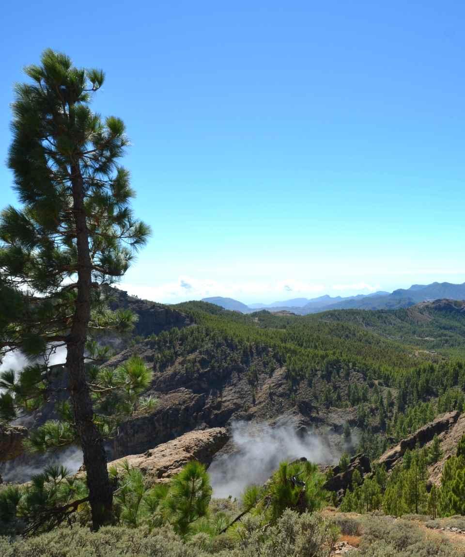 Bustour De bergtoppen van Gran Canaria