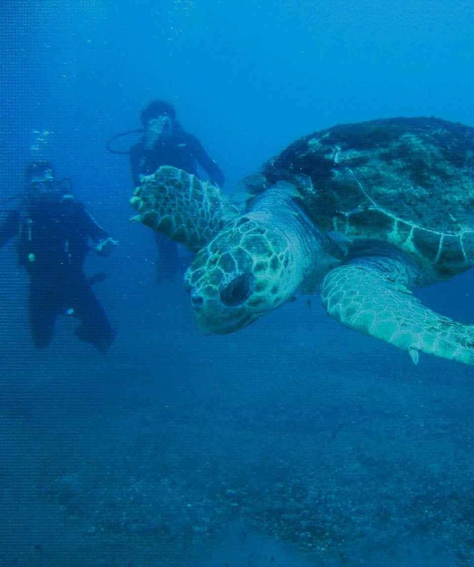 Curso PADI Open Water Diver Gran Canaria