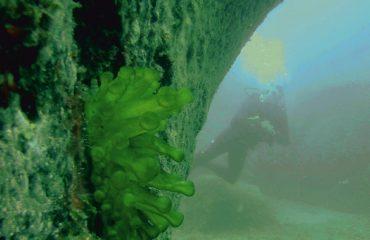 Scuba Diving Kurs
