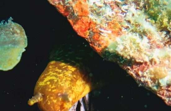 Scuba Diving Cursus Gran Canaria
