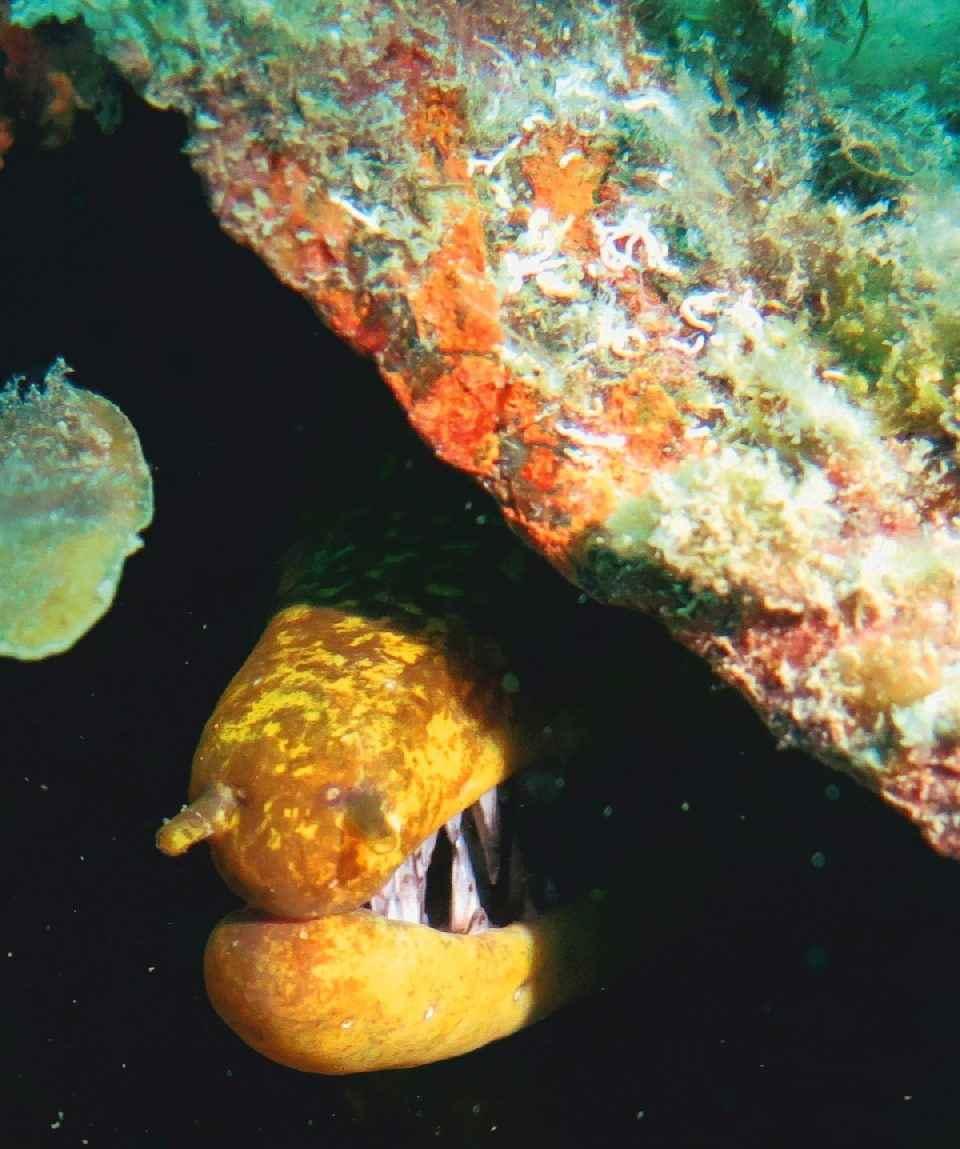 Gran Canaria Scuba Diving Kurs Course