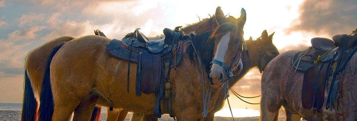 Gran Canaria Riding