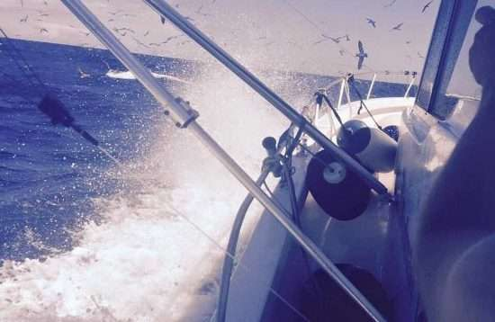 Big Game Fishing Angeln Trolling Charter Puerto de Mogan Gran Canaria