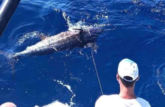 Charter Big Game Fishing Puerto Rico Gran Canaria